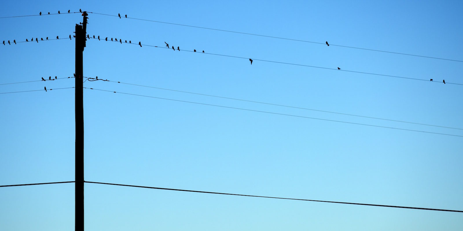 brids_on_wires